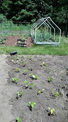 Garden after a planting